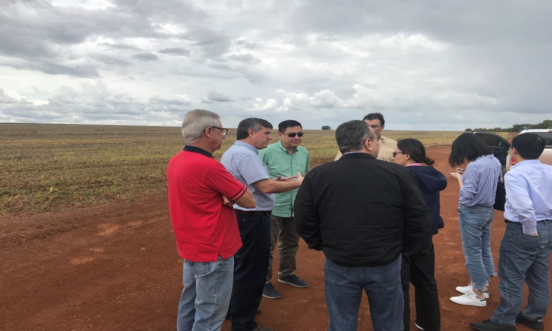 Yang Yi Visits Brazilian Soybean Farms and CCCC South America Regional  Company - Yang Yi Visits Brazilian Soybean Farms And CCCC South America